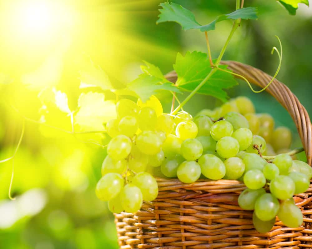 bunch-of-white-grapes-in-basket-outdoors